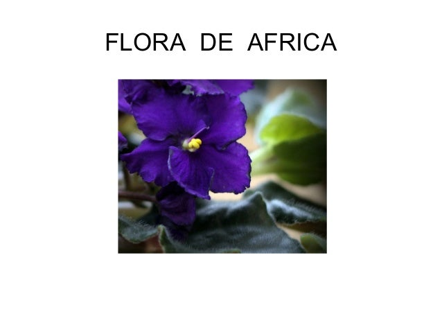 FLORA DE AFRICA