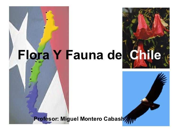 Flora Y Fauna de  Chile Profesor: Miguel Montero Cabash