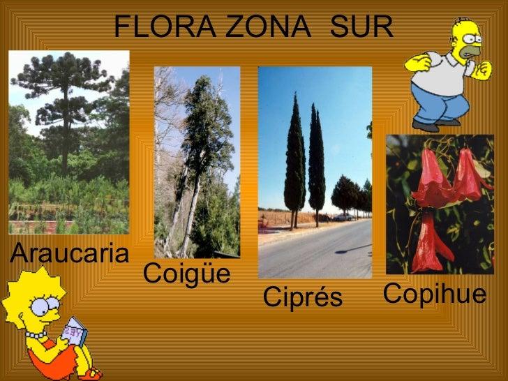Flora y fauna zona norte de chile icarito recent for Piletas publicas en zona norte