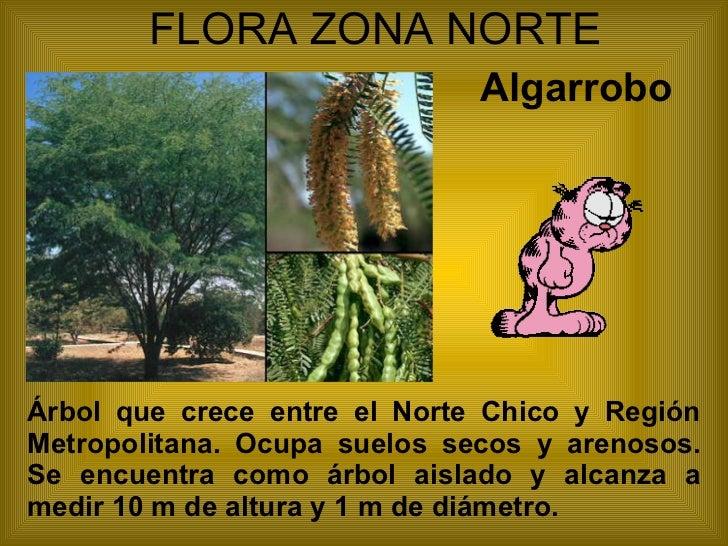 Flora Y Fauna Zona Norte De Chile Icarito Recent