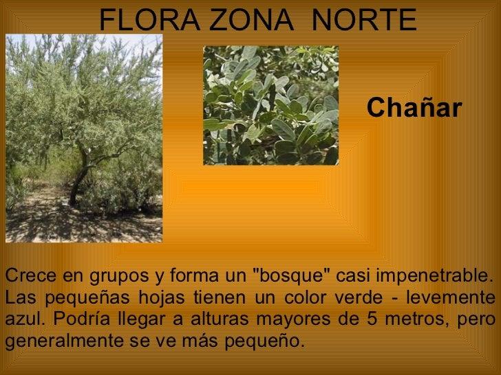 Cual es la fauna de la zona norte grande de chile for Piletas publicas en zona norte