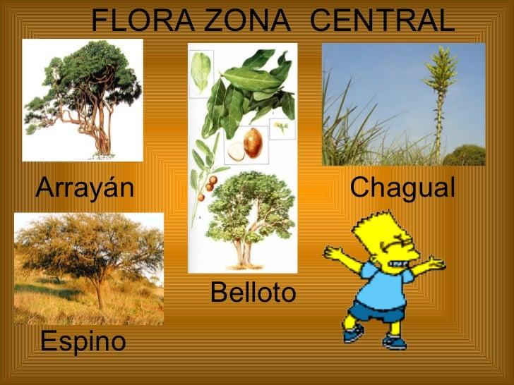 Flora y fauna zona norte de chile icarito recent for Marmoles y granitos zona norte