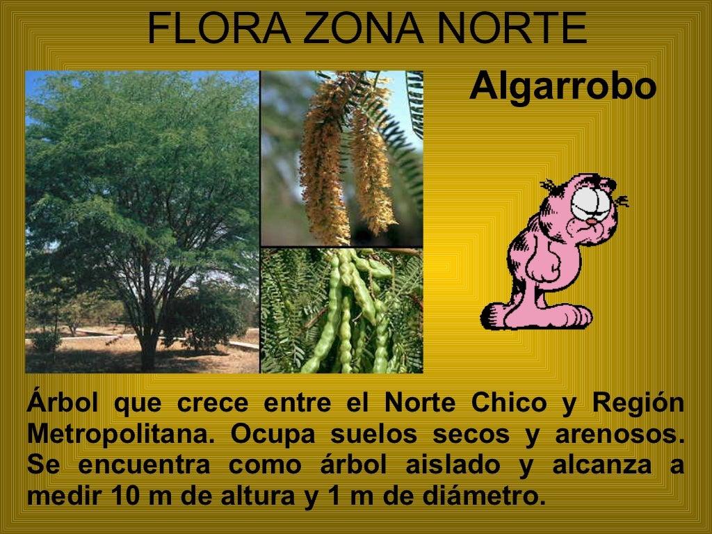 Flora y fauna de chile for Poda de arboles zona sur