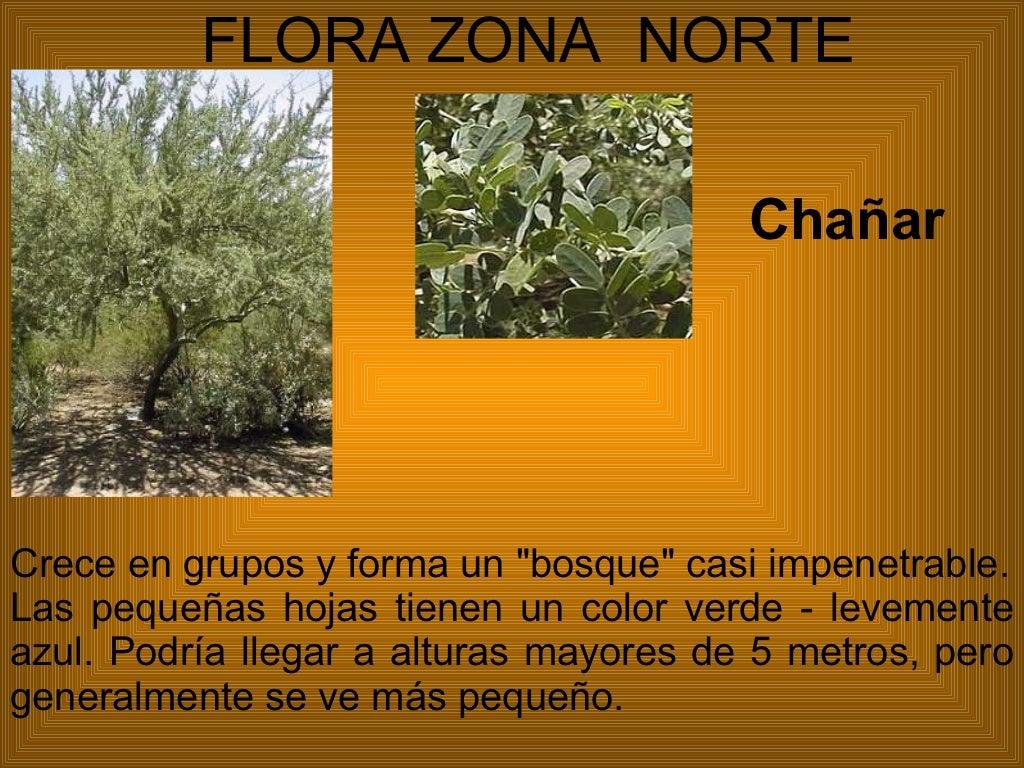 Flora y fauna de chile for Marmoles y granitos zona norte