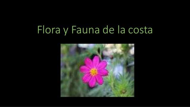 Flora y Fauna de la costa