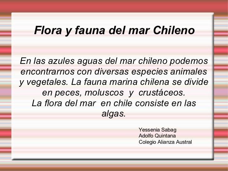 Flora y fauna del mar Chileno En  las   azules   aguas  del mar chileno podemos encontrarnos con diversas especies animale...