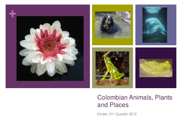 +    Colombian Animals, Plants    and Places    Kinder. 2nd. Quarter 2012