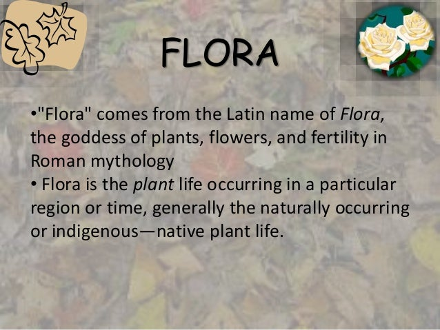 all of the plant life of a particular region