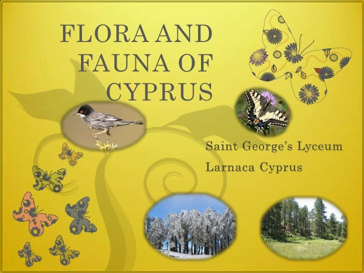 FLORA AND FAUNA OF CYPRUS<br />Saint George's Lyceum<br />Larnaca Cyprus<br />