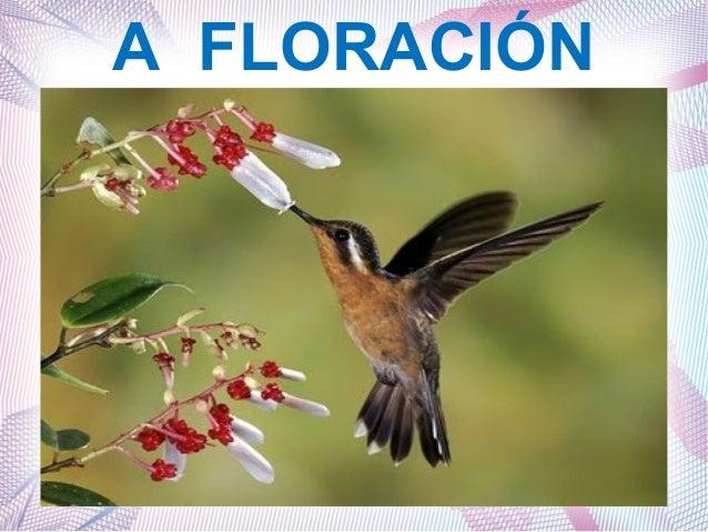 A FLORACIÓN