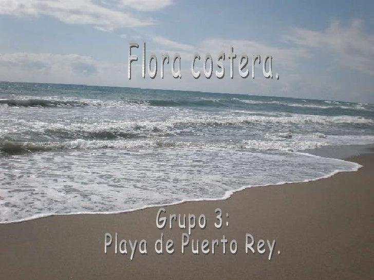 Flora costera. Grupo 3: Playa de Puerto Rey. Grupo 3: Playa de Puerto Rey. Flora costera.