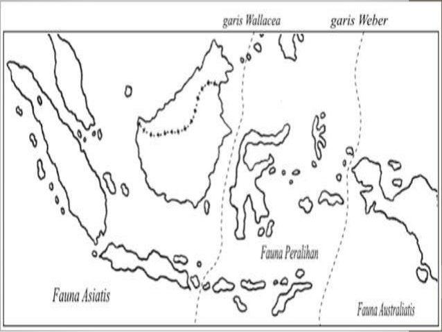 Peta Persebaran Flora Dan Fauna Di Indonesia Bagian Tengah
