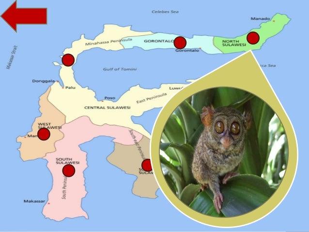52+ Gambar Persebaran Flora Dan Fauna Di Indonesia Terlihat Keren