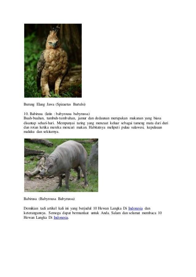 86 Gambar Hewan Langka Dan Penjelasan HD Terbaru