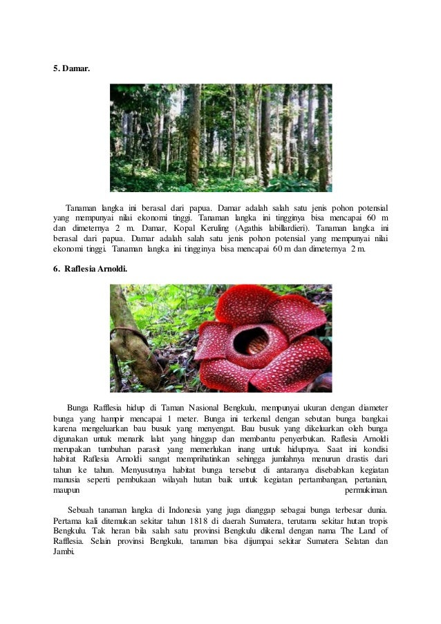Unduh 10100+ Gambar Bunga Raflesia Dan Keterangannya Paling Keren