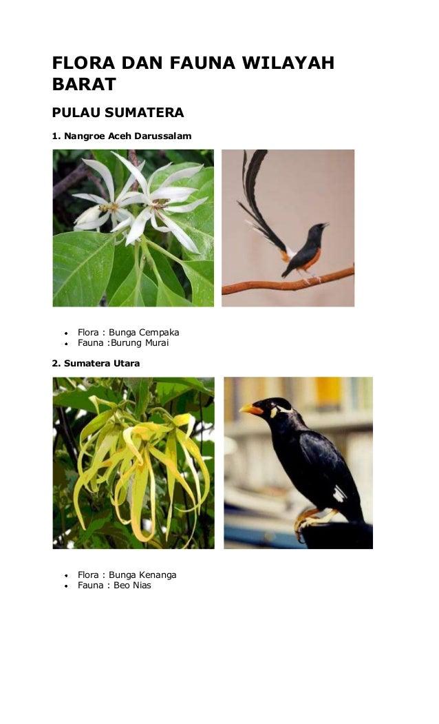 FLORA DAN FAUNA WILAYAH BARAT PULAU SUMATERA 1. Nangroe Aceh Darussalam  Flora : Bunga Cempaka Fauna :Burung Murai 2. Suma...