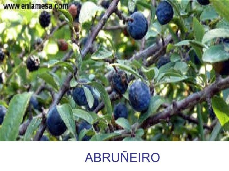 ABRUÑEIRO