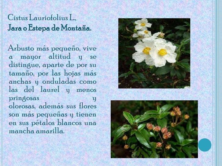 Flora de la laguna - Mas l estepa agullana ...