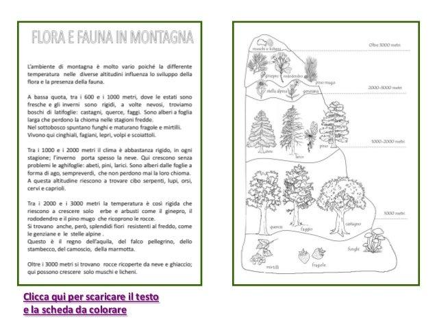 Flora e fauna della montagna - Immagini da colorare delle montagne ...