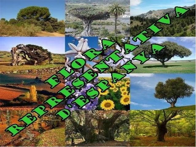Índex1. Introducció de flora que poden trobar.    1.1. Classificar-les per zones.2. Fitxes de la flora més representativa....