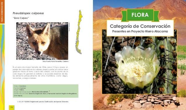 Flora fauna atacama 91b563dea83
