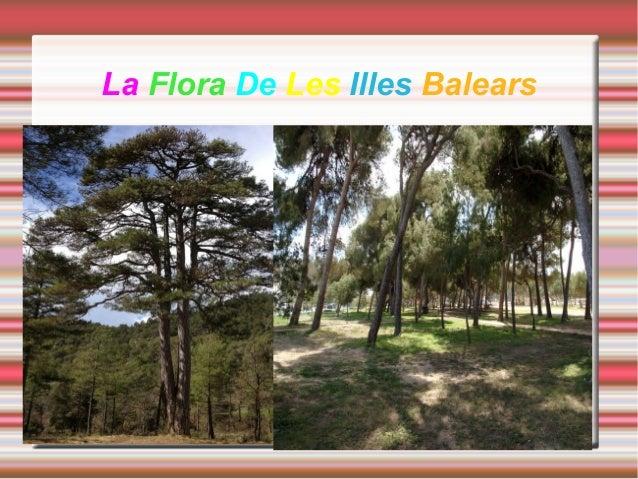 La Flora De Les Illes Balears