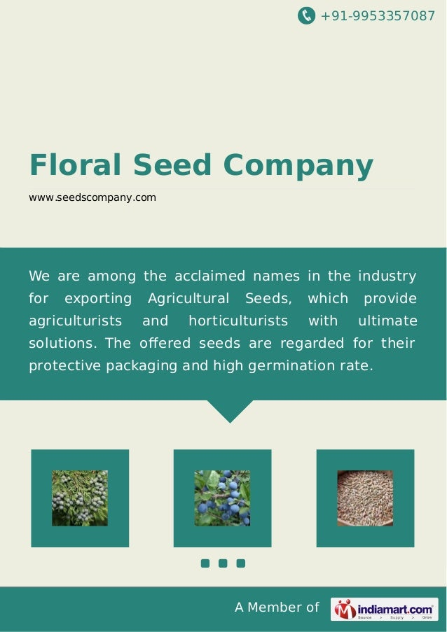 +91-9953357087  Floral Seed Company www.seedscompany.com  We are among the acclaimed names in the industry for  exporting ...