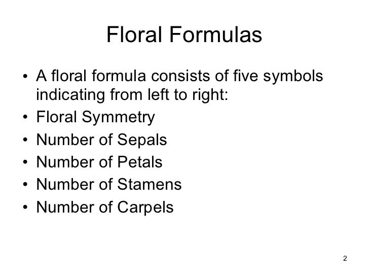 Floral formulas and diagrams floral ccuart Gallery