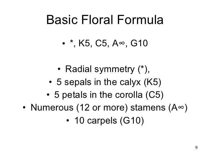 Floral formulas and diagrams 9 basic floral formula ccuart Gallery