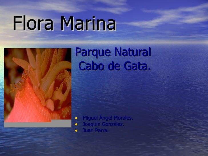 Flora Marina <ul><li>Parque Natural </li></ul><ul><li>Cabo de Gata. </li></ul><ul><li>Miguel Ángel Morales. </li></ul><ul>...