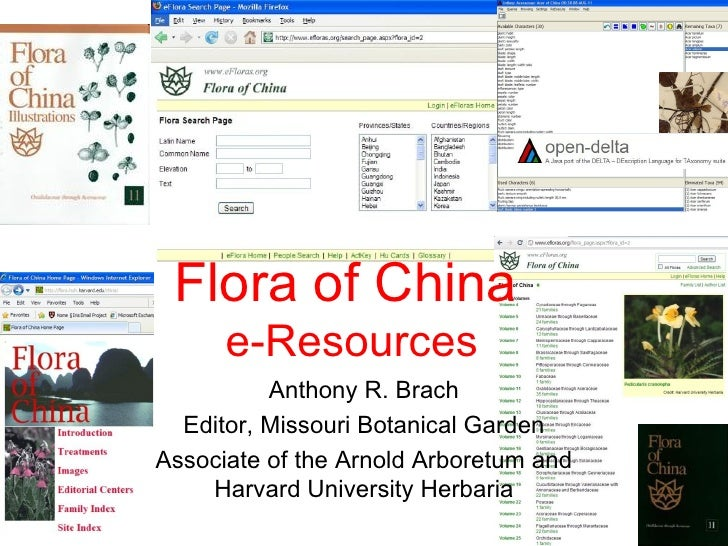 Flora of China      e-Resources          Anthony R. Brach  Editor, Missouri Botanical GardenAssociate of the Arnold Arbore...