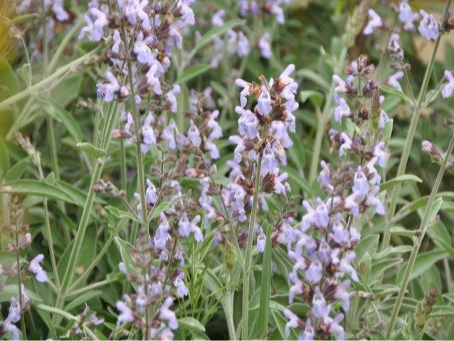 Flora representativa de murcia