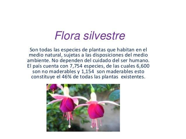 Flora silvestre adela for Todas las plantas son ornamentales