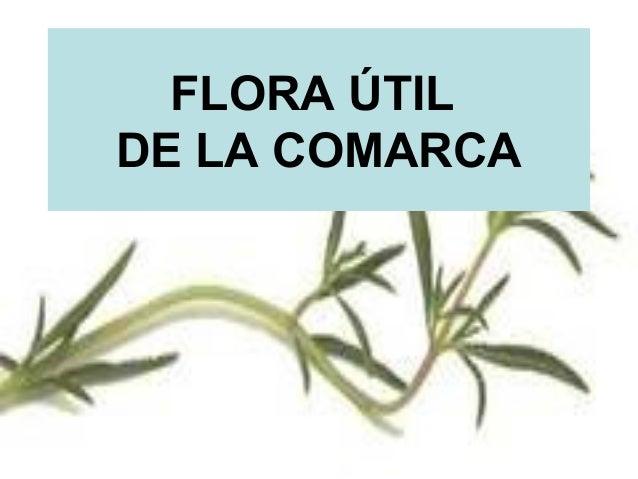 FLORA ÚTILDE LA COMARCA