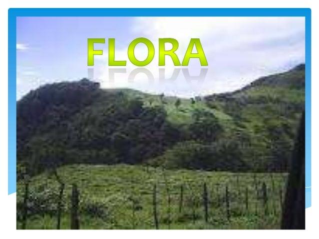 IntroducciónEl término flora, procedente del latín, alude a Flora, diosaromana de las flores, jardines y de la primavera.E...