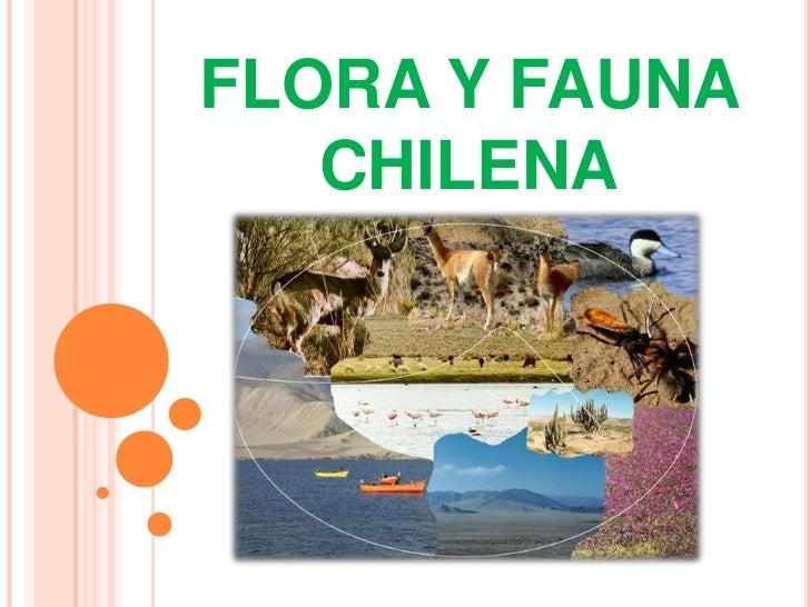 FLORA Y FAUNA CHILENA<br />