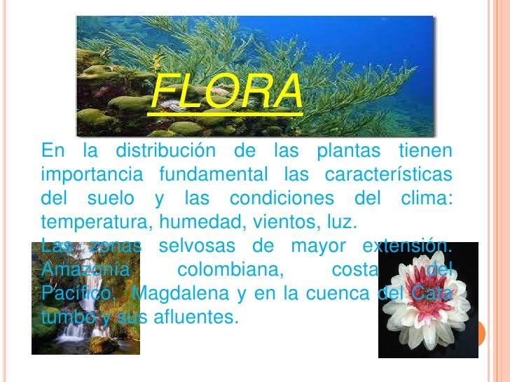 Flora y fauna colombiana - Pisos en estepa ...