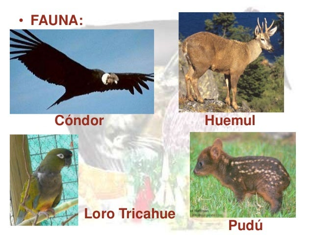 20 animales en peligro de extincion yahoo dating 8