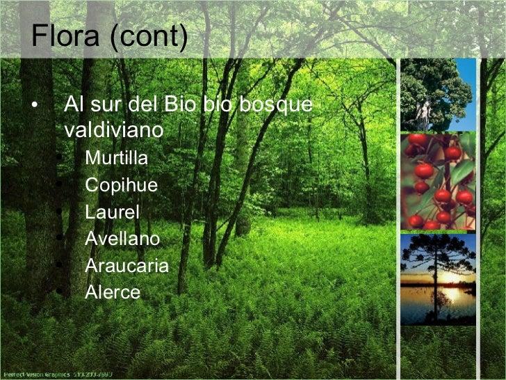 Fauna - Bio