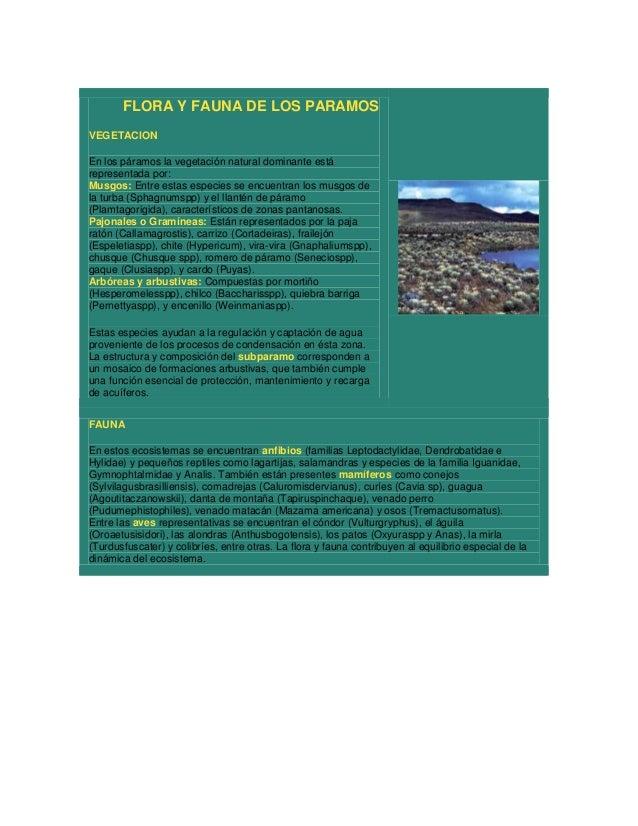 FLORA Y FAUNA DE LOS PARAMOSVEGETACIONEn los páramos la vegetación natural dominante estárepresentada por:Musgos: Entre es...