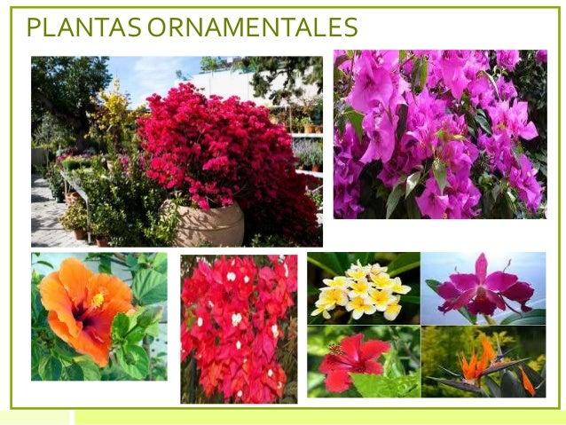 Flora y fauna de panam for 5 nombres de plantas ornamentales