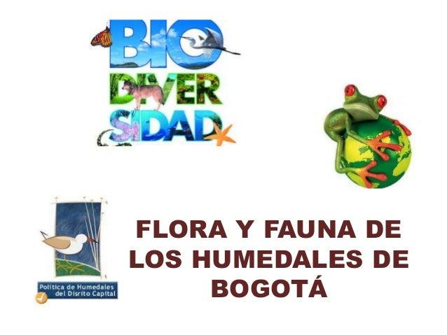 FLORA Y FAUNA DELOS HUMEDALES DE     BOGOTÁ