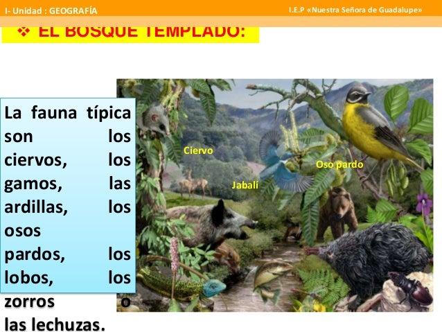 Flora y fauna sabanas