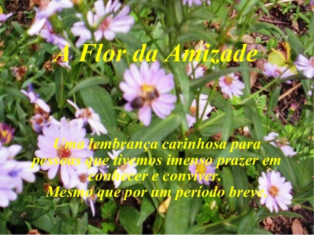 A Flor da Amizade  Uma lembrança carinhosa para pessoas que tivemos imenso prazer em conhecer e conviver. Mesmo que por um...
