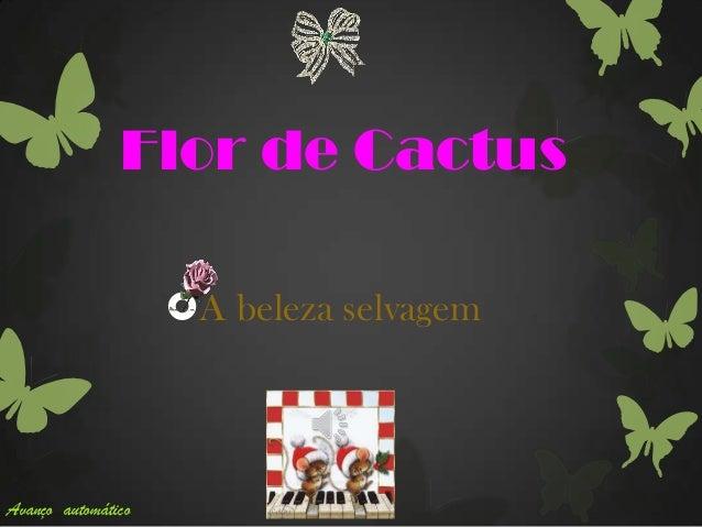 Flor de Cactus A beleza selvagem Avanço automático