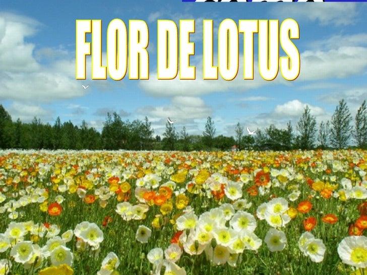 Viver como as flores… FLOR DE LOTUS