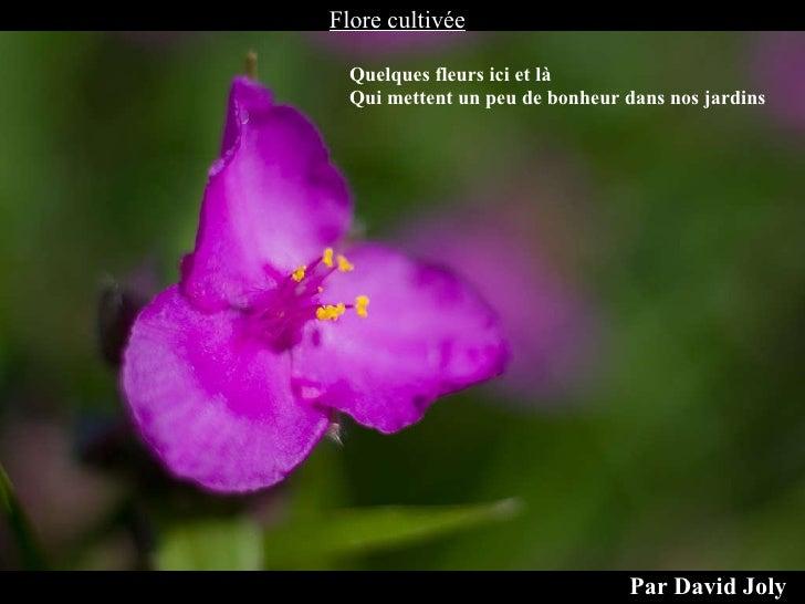 Flore cultivée Par David Joly Quelques fleurs ici et là Qui mettent un peu de bonheur dans nos jardins