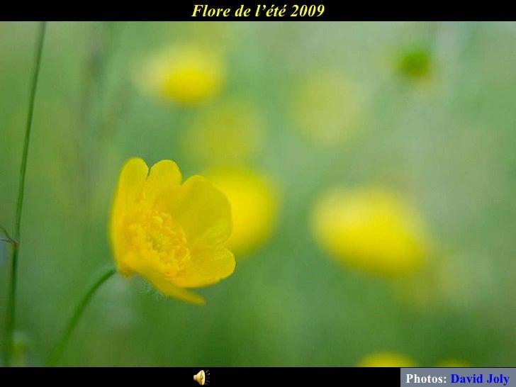 Flore de l'été 2009 Photos:  David Joly