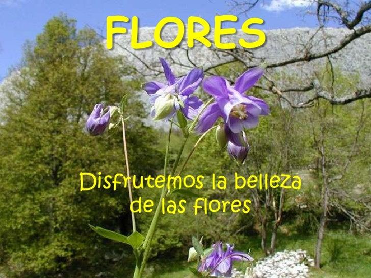 FLORES<br />Disfrutemos la belleza de las flores<br />