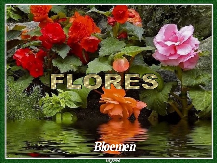 Bloemen FLORES